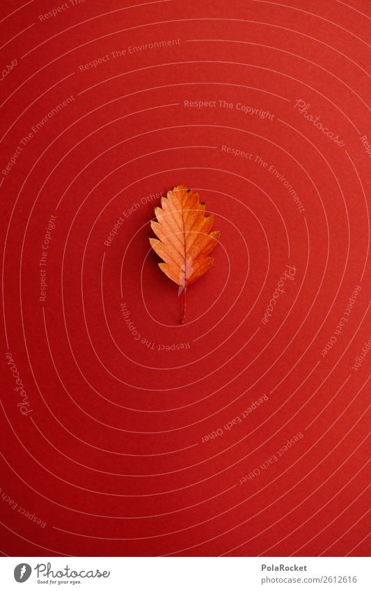 #A# Decent Leaf Art Work of art Esthetic Design Decoration Autumn Autumnal Autumn leaves Autumnal colours Early fall Automn wood Creativity Red spine of a book