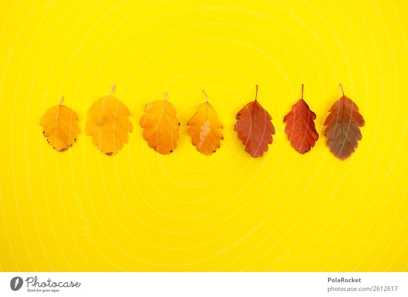 #A# Designer Autumn Art Esthetic Autumnal Autumn leaves Autumnal colours Early fall Yellow Yellowness Gaudy Leaf Nature Creativity Graphic Design studio