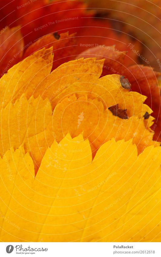 #A# Leaf gradient Art Esthetic Autumn Autumnal Autumn leaves Autumnal colours Early fall Progress Color gradient Automn wood Nature Colour photo Multicoloured