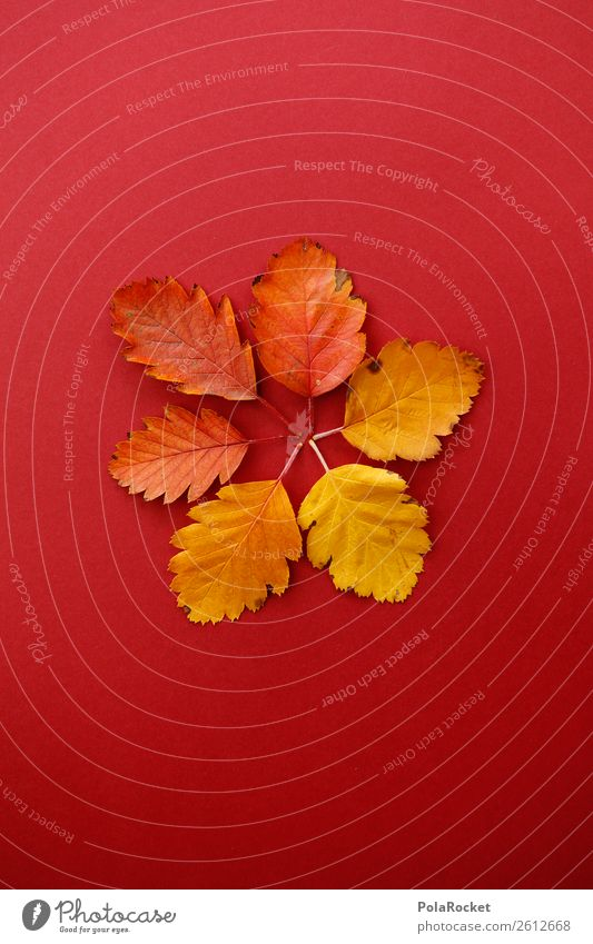 #A# Sixes in the foliage Art Work of art Esthetic Autumn Autumnal Autumn leaves Autumnal colours Early fall Automn wood Design Decoration Symmetry Fashioned