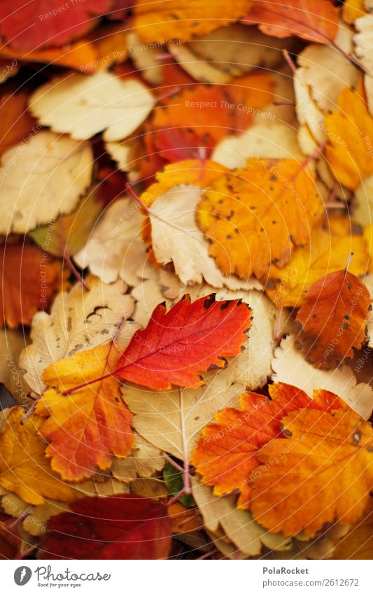 #A# Bunch of fall Environment Nature Esthetic Leaf Autumn Autumnal Autumn leaves Autumnal colours Early fall Automn wood Autumnal weather Autumnal landscape