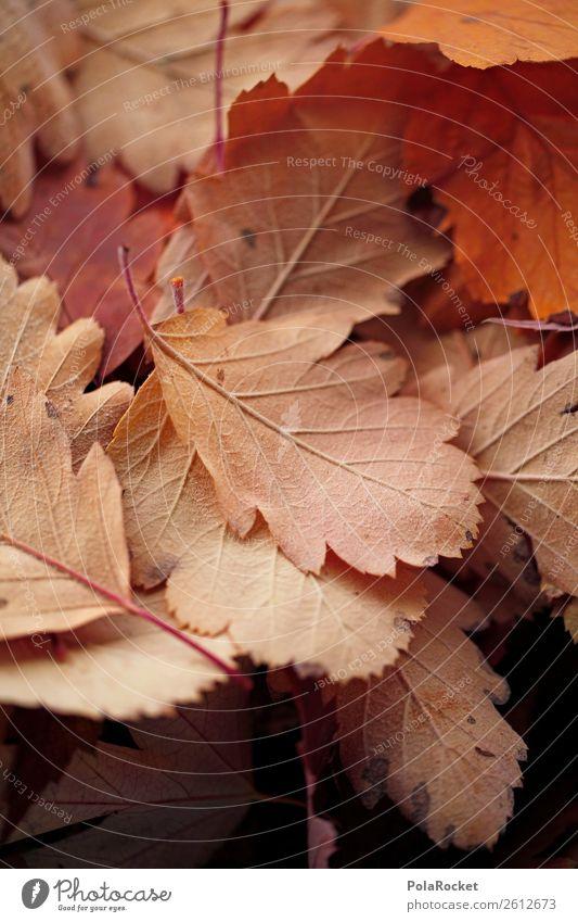 #A# Decent Autumn Nature Esthetic Leaf Autumnal Autumn leaves Autumnal colours Early fall Autumnal weather Seasons Beige Colour photo Subdued colour