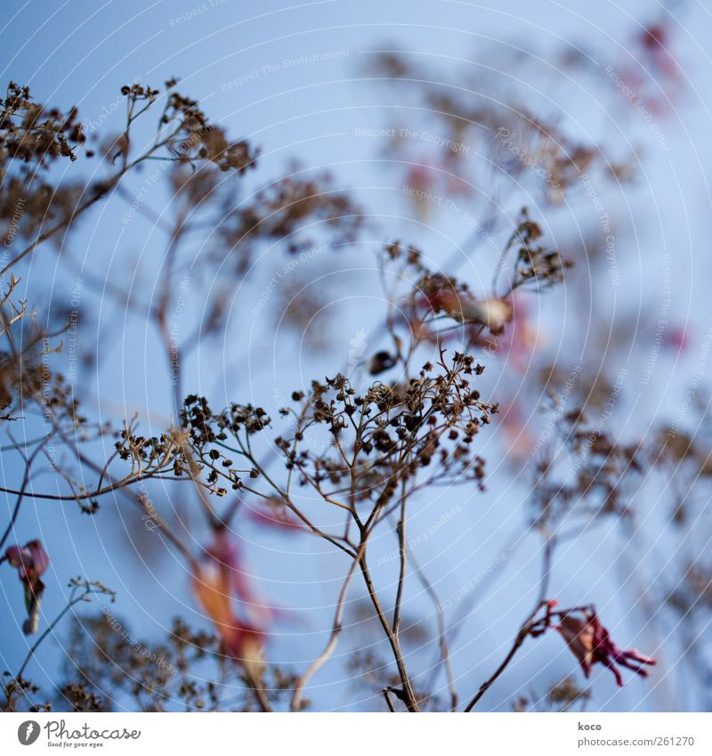 Old Blue Beautiful Red Plant Black Yellow Environment Blossom Brown Authentic Hope Network Change Bushes Transience