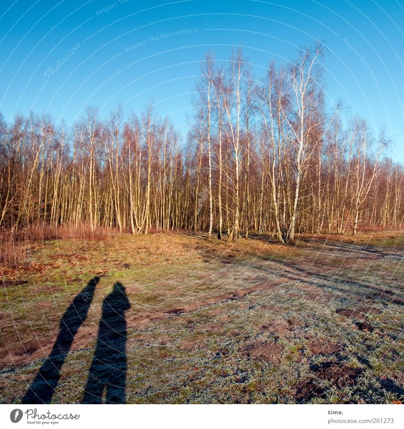 Human being Sky Nature Tree Winter Forest Environment Landscape Friendship Field Beautiful weather Attachment Moss Relationship Birch tree Bog