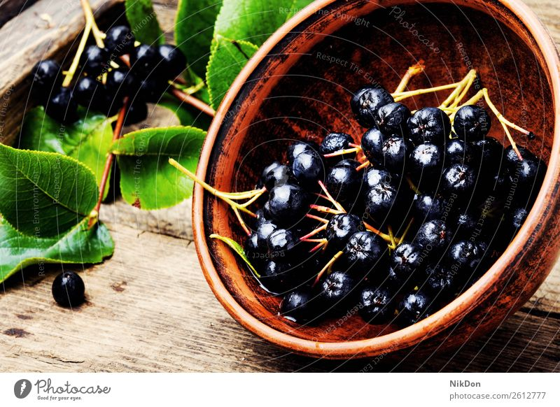 Chokeberry with leaf fruit chokeberry aronia nature branch plant ripe fresh natural organic healthy raw harvest group bunch autumn diet aronia melanocarpa rowan