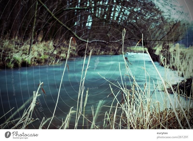 120# Environment Nature Landscape Plant Autumn Winter Climate Climate change Brook Target Flow Water Colour photo Exterior shot Lomography Holga Day Blur