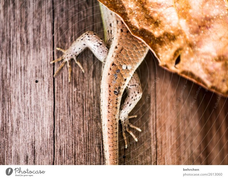 Caught Vacation & Travel Tourism Trip Adventure Far-off places Freedom Animal Wild animal Gecko 1 Exceptional Exotic Fantastic Hide Leaf Limp Malaya Asia