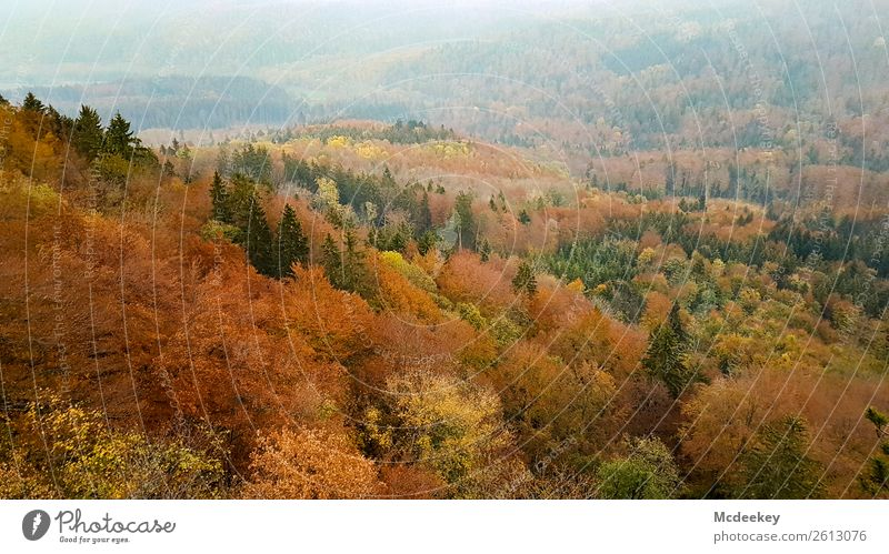 Nature Plant Beautiful Green Landscape Tree Leaf Forest Black Autumn Yellow Environment Cold Natural Orange Brown