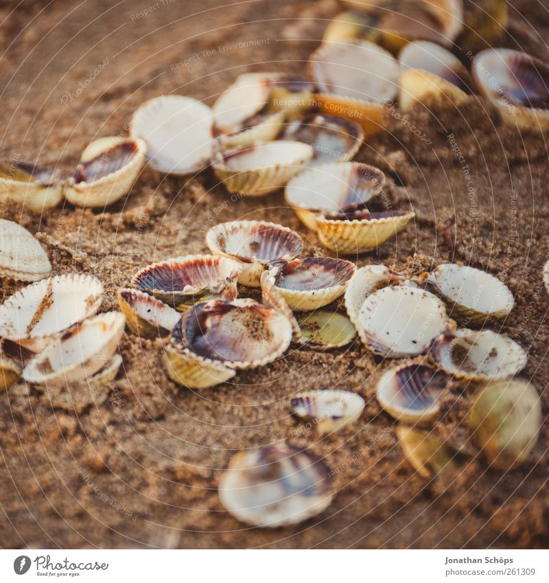 clam collection Senses Relaxation Calm Meditation Vacation & Travel Trip Far-off places Summer Summer vacation Environment Nature Sand Beautiful weather Warmth