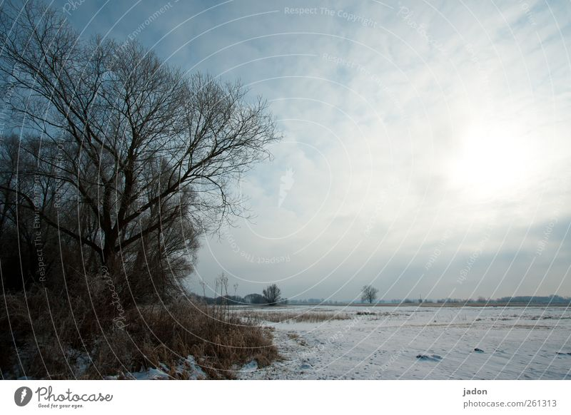 winter blues. Winter Snow Landscape Sky Clouds Sunlight Ice Frost Tree Bushes Field Deserted Cold Gloomy Gray Calm Longing Apocalyptic sentiment Sadness