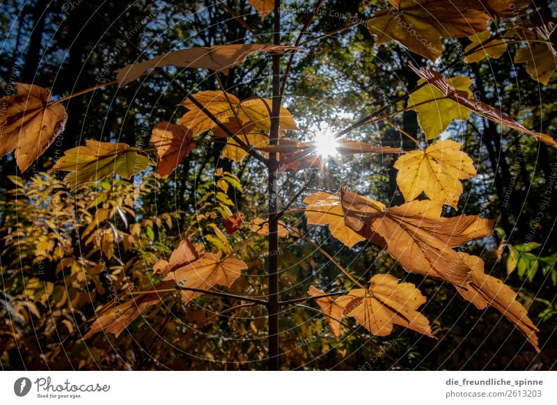 Sky Nature Plant Blue Town Sun Tree Animal Leaf Forest Autumn Yellow Environment Berlin Grass Germany