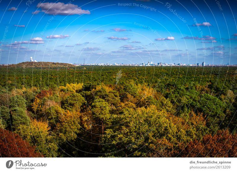 Sky Nature Plant Blue Green Landscape Sun Tree Forest Mountain Autumn Yellow Environment Berlin Germany Orange