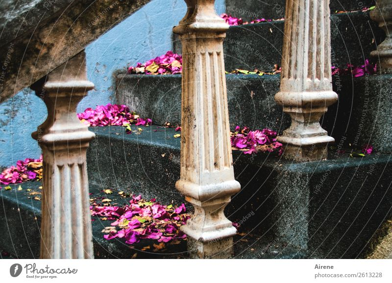 Blossom Sadness Feasts & Celebrations Gray Pink Decoration Stairs Wedding Handrail Longing Castle Turquoise End Blossom leave Disappointment Experience