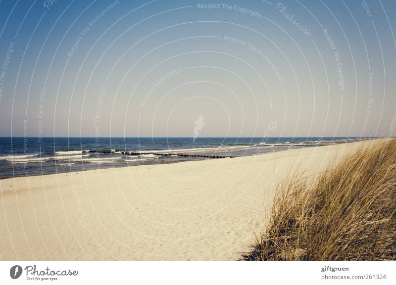 On the beach Environment Nature Landscape Plant Elements Sand Water Sky Cloudless sky Summer Beautiful weather Waves Coast Beach Baltic Sea Ocean Natural Blue