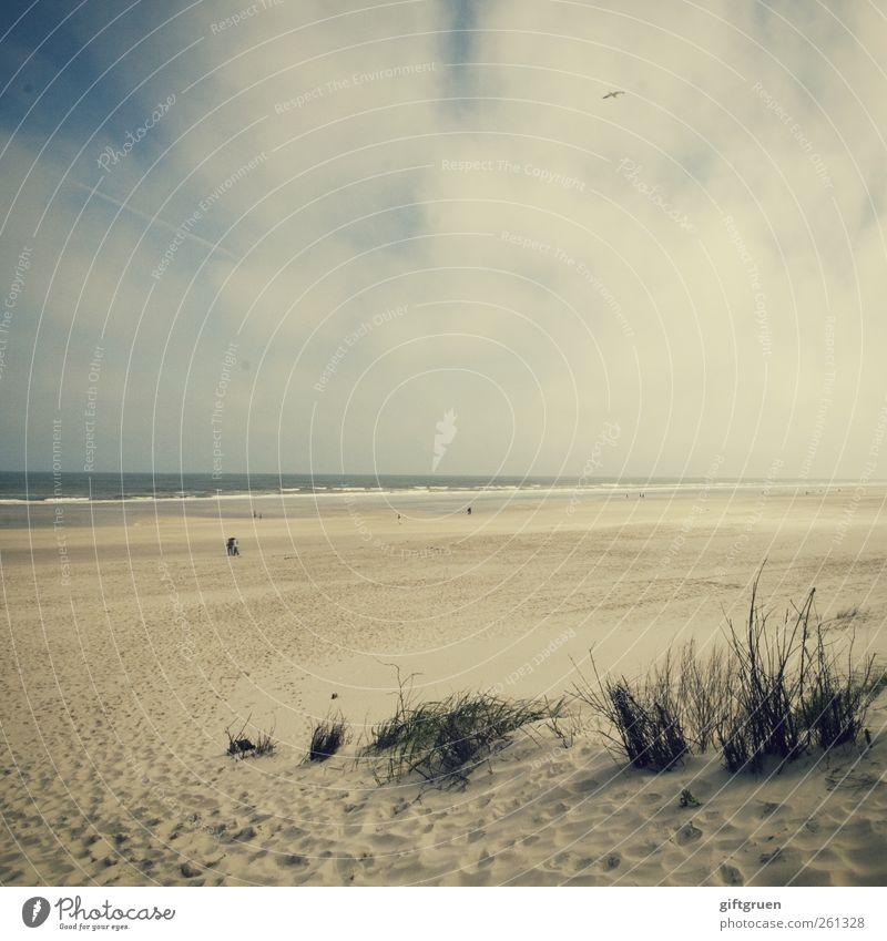 Sky Nature Water Plant Ocean Beach Clouds Far-off places Environment Landscape Grass Sand Coast Horizon Weather Waves