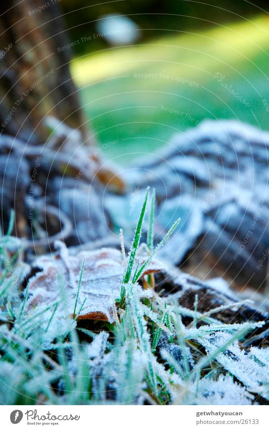 cold shower Grass Park Winter Autumn White Leaf Cold Tree Wood Light Blur Lawn Frost Shadow Floor covering