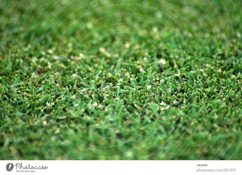 grass Nature Plant Grass Park Earth Racing sports Golf Stadium Crouch Rugby Track and Field Baseball Kick Close-up House cricket