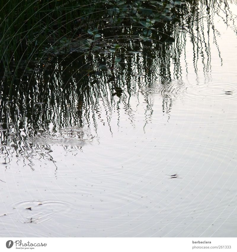 The kingdom of the water strider Nature Water Grass Bushes Lakeside Animal Insect Water strider Line Circle Water reflection Movement Walking Swimming & Bathing