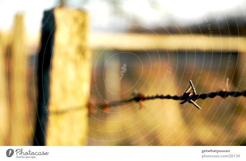 On wire Fence Barbed wire Light Beautiful Physics Meadow Hill Blur Near Bushes Wooden board Autumn Sun Evening Warmth Pasture Sky