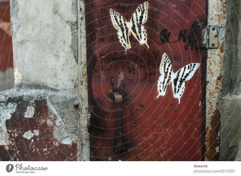 street butterflies Style Design Exotic Leisure and hobbies Vacation & Travel Adventure Freedom Sightseeing City trip Art Street art Animal Butterfly Elegant