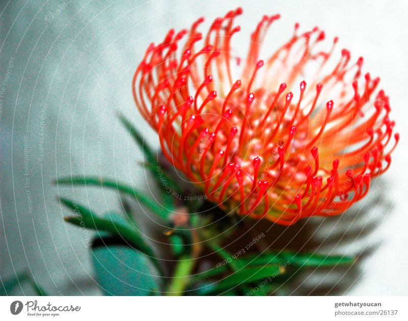 Flower Green Plant Red Leaf Wall (building) Blossom Bright Exceptional Stalk Exotic Anonymous Foreign Flashy