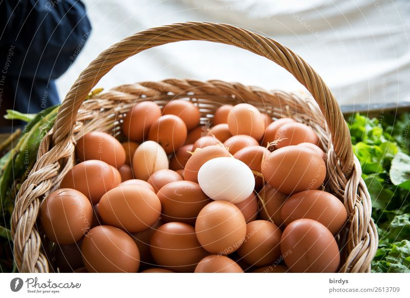 Notice the loose organic eggs. Food Egg Nutrition Organic produce Healthy Eating Market stall Agriculture Forestry Basket Sell Authentic Uniqueness Positive