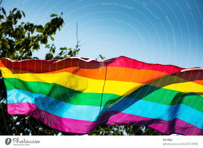 rainbow colours Cloudless sky Summer Beautiful weather Tree Sign Stripe Flag Prismatic colors Rainbow flag Illuminate Esthetic Exceptional Positive