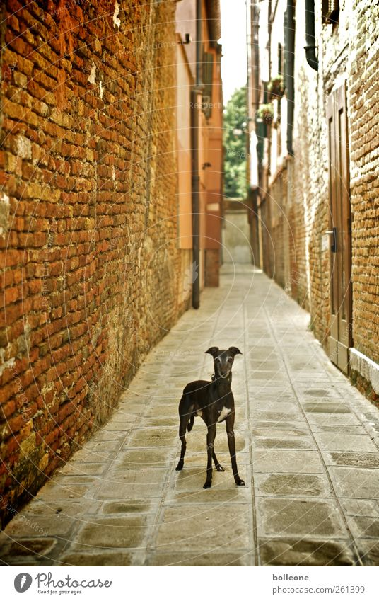 Dog City Vacation & Travel Animal Wall (building) Architecture Lanes & trails Stone Wall (barrier) Brown Door Facade Stand Curiosity Manmade structures Italy