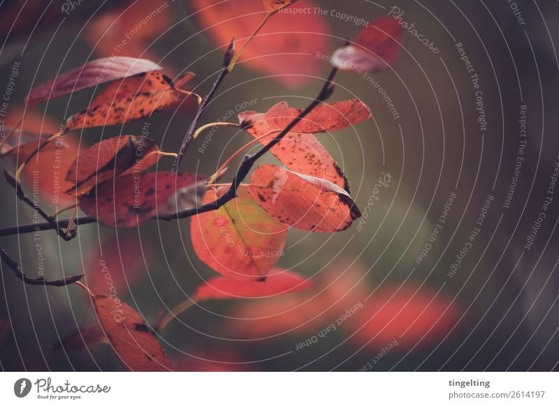 autumn Environment Nature Plant Autumn Tree Leaf Forest Hang Faded To dry up Brown Red Black Branch Twigs and branches Colour photo Subdued colour Exterior shot
