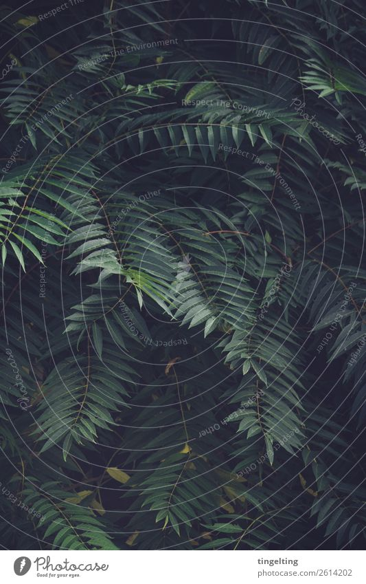 primeval forest Environment Nature Plant Leaf Foliage plant Wild plant Exotic Field Virgin forest Breathe Green Background picture Dark Undergrowth Palm tree