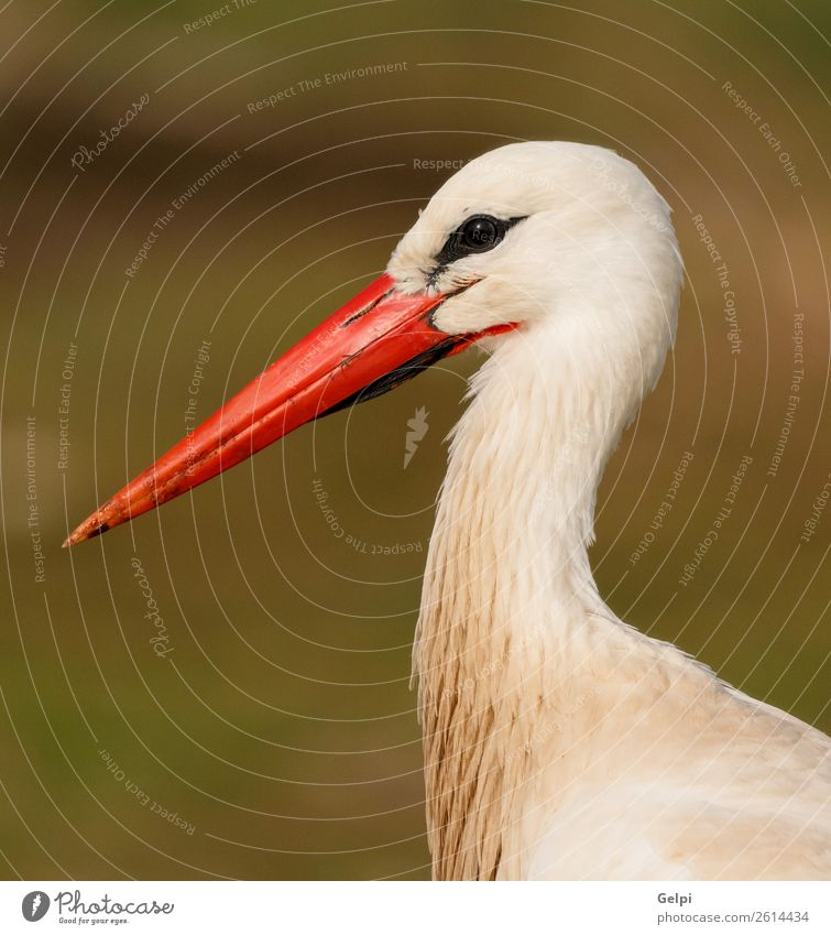 Portrait of a elegant stork on a natural background Nature Blue Colour Beautiful Green White Red Flower Animal Black Adults Grass Couple Freedom Bird Flying