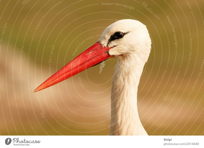 Portrait of a elegant stork on a natural background Elegant Beautiful Freedom Couple Adults Nature Animal Wind Flower Grass Bird Flying Long Wild Blue Green Red