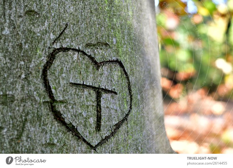 'T' in heart on tree bark* Nature Summer Autumn Beautiful weather Tree Park Forest Wood Sign Characters Ornament Heart Think Love Dream Authentic Free