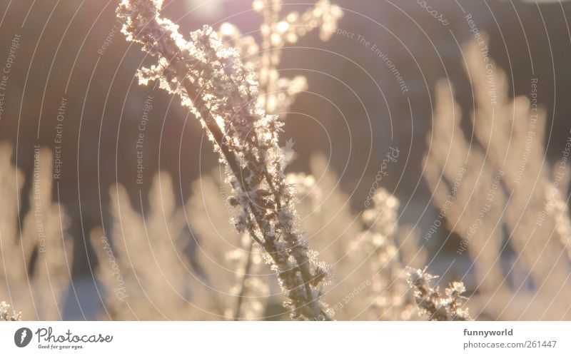 winter light Nature Plant Sunlight Winter Beautiful weather Ice Frost Grass Bushes Outskirts Deserted Relaxation Illuminate Esthetic Cold Gold Emotions Trust