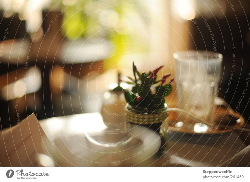White Green Beautiful Yellow Moody Brown Glass Esthetic Table Decoration Beverage Sweet Coffee Violet Tea Café