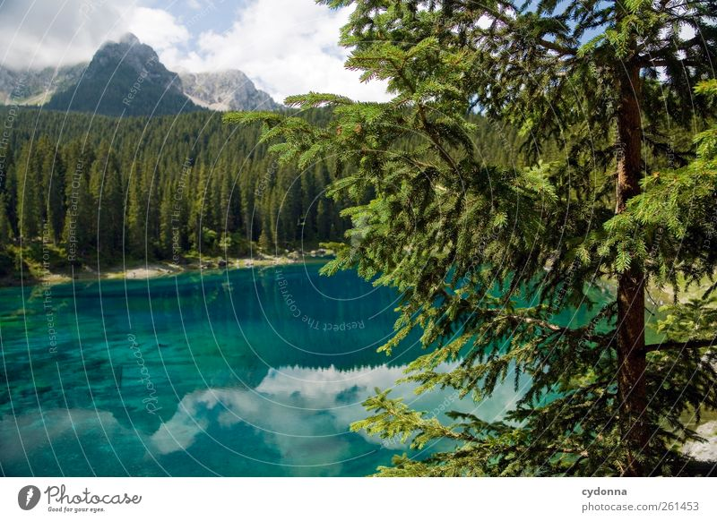 Nature Blue Water Tree Vacation & Travel Summer Loneliness Calm Forest Far-off places Relaxation Environment Landscape Mountain Freedom Lake