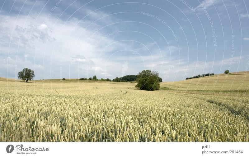 rural pictorial agriculture scenery at summer time Food Grain Harmonious Summer Agriculture Forestry Landscape Tree Grass Bushes Meadow Field Growth Simple