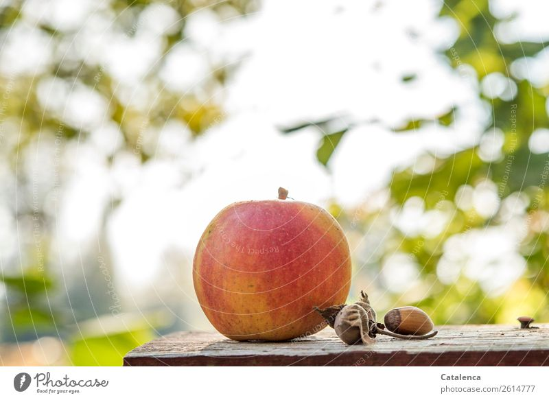 Apple in the morning Nature Plant Sky Autumn Tree Leaf Fruit Hazelnut kernel Garden Chopping board Wood Alluring Firm Beautiful Delicious Round Juicy Brown