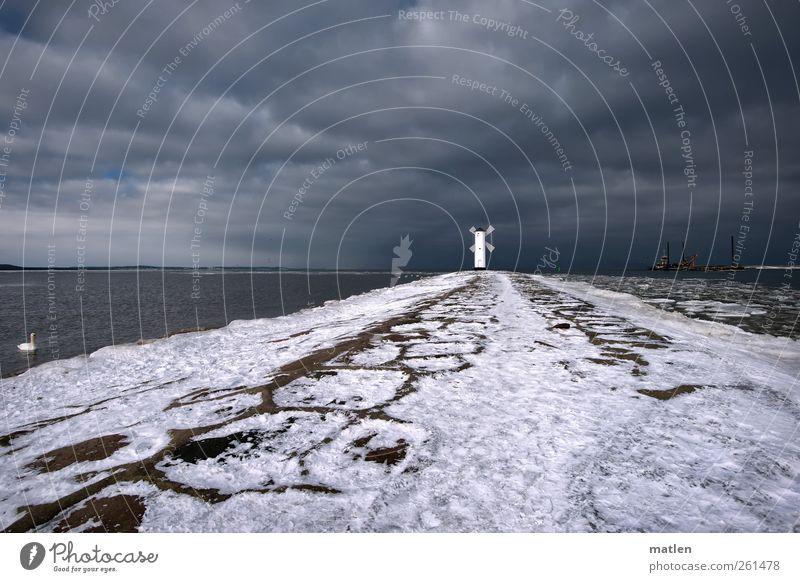 White Winter Animal Dark Snow Gray Coast Weather Harbour Navigation Baltic Sea Swan Storm clouds Navigation mark