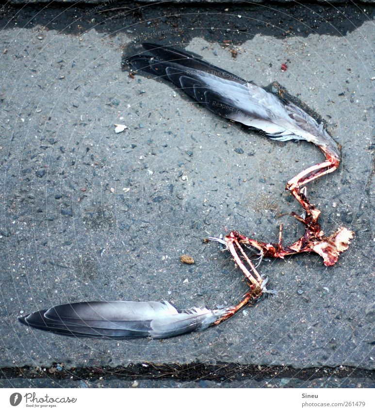 City Animal Loneliness Calm Death Cold Sadness Bird Fear Wet Beginning Wing Grief Feather Target Asphalt