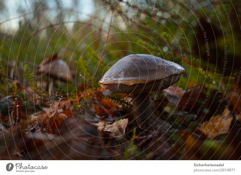 Nature Plant Leaf Calm Forest Autumn Bushes Mushroom Moss Damp Marsh Bog Wild plant
