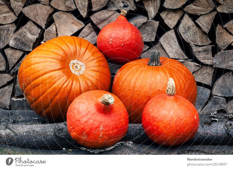 thanksgiving Vegetable Fruit Nutrition Eating Organic produce Vegetarian diet Diet Garden Wood Fat Brown Orange Appetite To enjoy Healthy Pure Quality Pumpkin