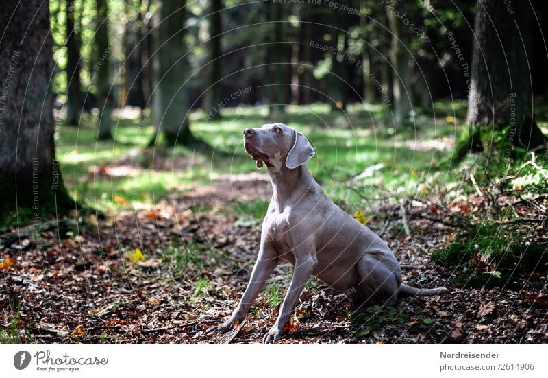 You got something for me? Hunting Trip Hiking Nature Landscape Earth Beautiful weather Tree Park Forest Animal Pet Dog Observe Communicate Playing Joy Loyal