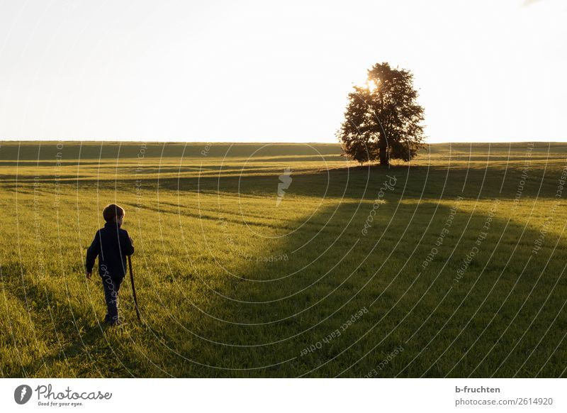 child, willow, tree, back light, evening mood, autumn mood Relaxation Leisure and hobbies Hiking Child 1 Human being 3 - 8 years Infancy Sunrise Sunset Sunlight