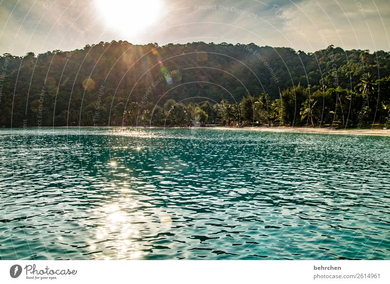 Let the sun shine in your heart relaxation Relaxation recover Romance Palm tree Dream island Paradise Virgin forest Island Asia Landscape Malaya