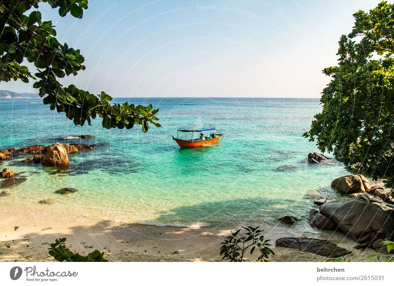 Vacation & Travel Nature Beautiful Landscape Tree Ocean Relaxation Leaf Far-off places Beach Coast Tourism Exceptional Freedom Rock Watercraft