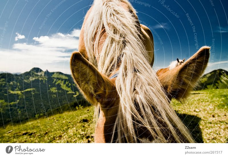 Sky Nature Vacation & Travel Animal Calm Far-off places Relaxation Environment Meadow Landscape Mountain Trip Stand Cute Horse Ear