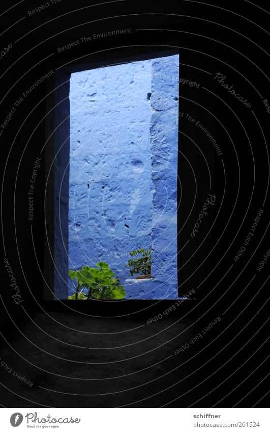 Blue view Manmade structures Building Architecture Wall (barrier) Wall (building) Facade Window Geranium Dark Blue tone Colour Narrow Plant Deserted