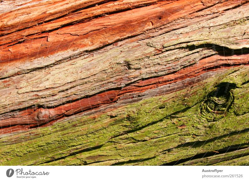 Nature Green Tree Red Wood Climate Elements Moss Weathered Wood grain