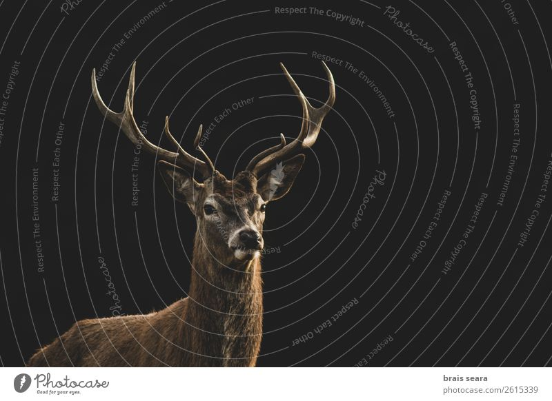 Red Deer Nature Colour Animal Forest Dark Autumn Yellow Environment Earth Brown Wild Park Masculine Wild animal Stand